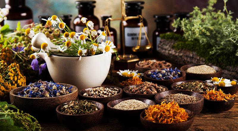 plantes medicinales pour le dos
