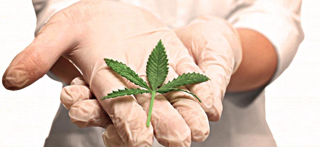 Le cannabis, anti douleurs efficace : entre réalité et mythe?