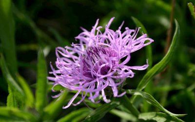 Harpagophytum : un bon complément pour soulager ses douleurs dorsales?