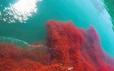L'huile de krill pour soulager les articulations douloureuses ?
